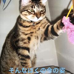 ルーク/癒し/猫飼いのしあわせ 今、ルークくんの里親さんからお手紙来まし…(3枚目)