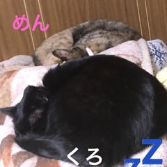 晩ご飯/黒猫/くろ/にこ/猫/めん 今日も一日お疲れ様です。 晩ご飯は煮しめ…(2枚目)