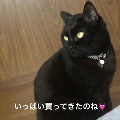 お魚屋さん/野菜/梅塩つけ麺/黒猫/くろ/にこ/... 今日も一日お疲れ様です。明日は末娘の卒業…(9枚目)