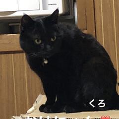 朝ご飯/空/くろ/黒猫/にこ/めん/... おはようございます☀朝、明るくなるの早く…(3枚目)