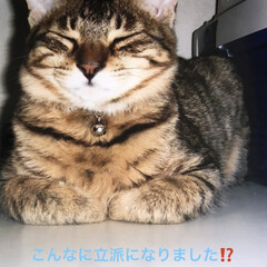 ルーク/癒し/猫飼いのしあわせ 今、ルークくんの里親さんからお手紙来まし…(4枚目)