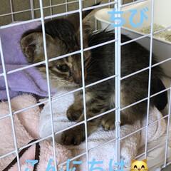 ちび/猫 朝からちびを連れて病院へ行ってきました。…