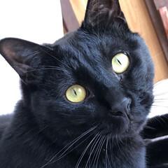 くろ/黒猫/猫/暮らし おかあたんが寝てるから私が投稿します。 …