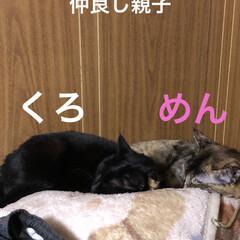 にこ/くろ/めん/猫/黒猫/朝ご飯/... 昨夜の猫たち😼😸😽 めんとくろ仲良く夜は…