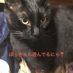 晩ご飯/めん/猫/にこ/くろ/黒猫 今日はゆっくり猫たちと過ごせた。 よく寝…(7枚目)