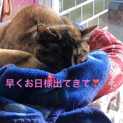 朝ご飯/空/猫飼いのしあわせ/癒し/めん/黒猫/... 今朝は寒かった😵まだ先週から薬の量が変わ…(5枚目)