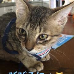 猫飼いのしあわせ/癒し/猫/めん/ちび 今日は長く1階にいてたので写真たくさん撮…(4枚目)