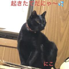 朝ご飯/空/くろ/黒猫/にこ/めん/... おはようございます☀朝、明るくなるの早く…(5枚目)