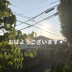 空/にこ/くろ/黒猫/めん/猫 おはようございます☀ 暑い😵掃除して洗濯…(1枚目)