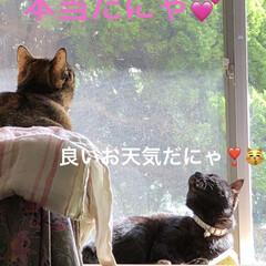 くろ/猫飼いのしあわせ/癒し/めん/ちび/花/... 明日からのお野菜たっぷり買いました。 見…