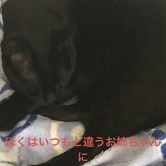 お祝いごと/晩ご飯/にこ/黒猫/くろ/めん/... こんばんは。今日も一日お疲れ様です。 我…(3枚目)