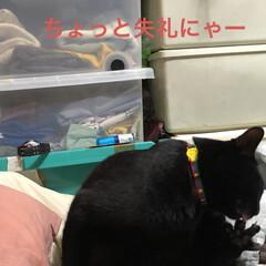猫飼さんのしあわせ/癒し/にこ/黒猫 唯一無二のにこくん。可愛い可愛い男の子で…(4枚目)