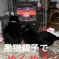 朝ご飯/空/ストーブ/くろ/にこ/黒猫/... おはようございます☀ 今朝は少し寒さまし…(3枚目)