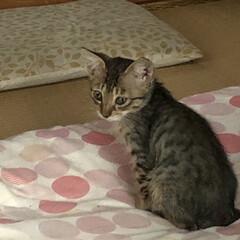 ちび/癒し/猫飼いのしあわせ/猫 ちびを保護して約二十日経ちました。 目や…(3枚目)