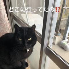 鶏白湯らーめん/お昼ご飯/黒猫/にこ/くろ こんばんは。 今日は朝から通院でした。な…(2枚目)