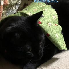 猫飼さんのしあわせ/癒し/黒猫/にこ/くろ/猫/... お正月用の首飾りくろとめんは可愛いの見つ…(1枚目)