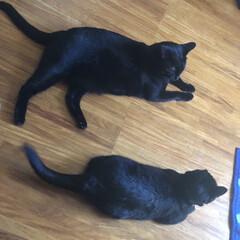 めん/くろ/にこ/黒猫/癒し/猫飼のしあわせ/... 今日は猫様の可愛い姿をたくさん見れた☺️…