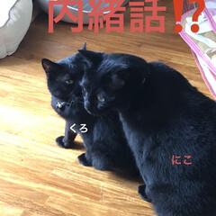 にこ/くろ/黒猫/猫/めん おはようございます☀ 雲はありますがお日…(4枚目)