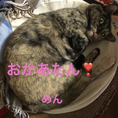 空/めん/猫/にこ/くろ/黒猫 朝からお元気な猫さまたち。お外の警備も怠…(6枚目)