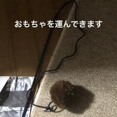 癒し/猫飼いのしあわせ/黒猫/にこ 昨夜、さぁ寝ようとするとおもちゃを運ぶ音…(3枚目)