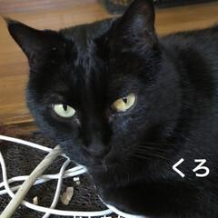 空/黒猫/にこ/くろ/猫/めん 今日はいいお天気。久しぶりに坂道下って駅…(8枚目)