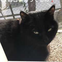 朝ご飯/空/猫飼いのしあわせ/癒し/めん/黒猫/... 今朝は寒かった😵まだ先週から薬の量が変わ…(6枚目)