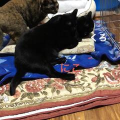猫/めん/黒猫/にこ/くろ/ストーブ/... 寒い朝です。いつものようにストーブぬくぬ…(3枚目)