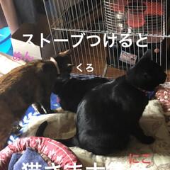 ストーブ/にこ/くろ/黒猫/めん/猫 とりあえずゆっくりしようとリビングのスト…(1枚目)