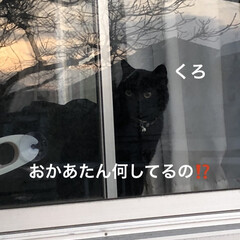 空/マスク/お花/くろ/にこ/黒猫/... おはようございます。今朝はまだ曇ってまし…(2枚目)