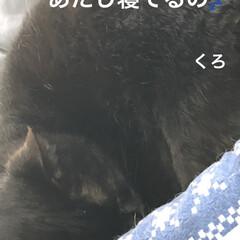 晩ご飯/めん/猫/にこ/くろ/黒猫 今日はゆっくり猫たちと過ごせた。 よく寝…(1枚目)