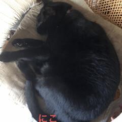 めん/猫/にこ/くろ/黒猫 こんにちはです😊 今日の猫さまたちはよく…(3枚目)