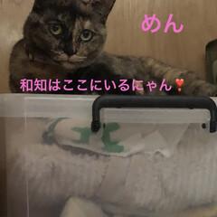 空/黒猫/くろ/にこ/猫/めん おはようございます☀ 暑いですね💦 少し…(3枚目)