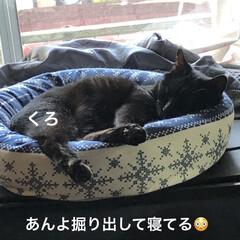 晩ご飯/めん/猫/にこ/くろ/黒猫 こんばんはです。 今日も一日お疲れ様です…(1枚目)