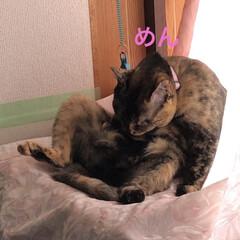 猫飼いのしあわせ/癒し/めん/猫/くろ/にこ/... おはようございます😊 朝から片付けに1人…(4枚目)
