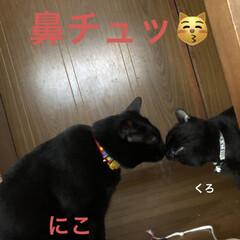 朝ご飯/めん/猫/にこ/くろ/黒猫 おはようございます☀ 良いお天気です。朝…(3枚目)
