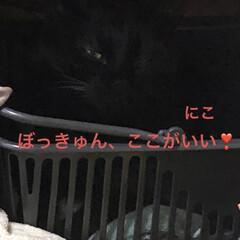 朝ご飯/空/黒猫/くろ/にこ/猫/... 夜中は良く雨が降りましたが朝はいいお天気…(6枚目)