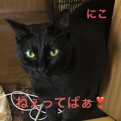 めん/猫/くろ/にこ/黒猫 のんびり休日。猫さまたちもまったり過ごし…(3枚目)