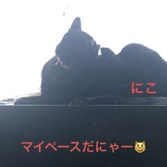 空/めん/猫/にこ/くろ/黒猫 おはようございます☀ いいお天気です。ゴ…(6枚目)