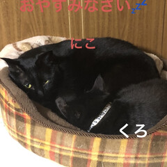 めん/猫/くろ/にこ/黒猫/癒し/... こんばんは。 今日も一日お疲れ様です。 …(1枚目)