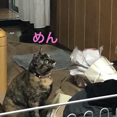 親子/黒猫/くろ/めん/猫 アクティブなくろとめん。楽しくて仕方ない…(6枚目)