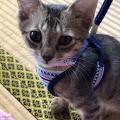 保護猫/ちび/猫/めん 今までで1番の接近。見てる私がハラハラド…(3枚目)