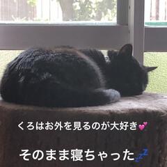 めん/猫/くろ/にこ/黒猫/癒し/... 気候のせいか早朝家事を勢いでこなしたら眠…