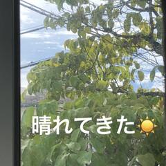 朝の風景/癒し/猫飼のしあわせ/親子/くろ/にこ/... 早朝は大雨だったのに今はもうお日様出てき…