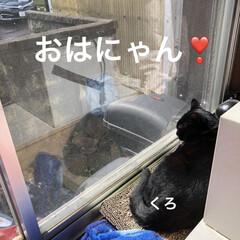 にこ/くろ/黒猫/猫/めん おはようございます☀ 雲はありますがお日…(1枚目)