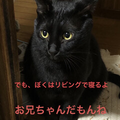 にこ/黒猫/癒し/猫飼いのしあわせ いつも穏やかで優しいにこはすっかりお兄ち…(5枚目)