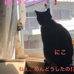 癒し/猫飼いのしあわせ/めん/猫/黒猫/にこ/... 今日は本当に良いお天気です。リビングの片…(6枚目)