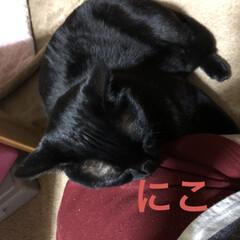 晩ご飯/黒猫/癒し/猫飼さんのしあわせ/にこ 今日も一日まったり過ごしてました。 お昼…(2枚目)