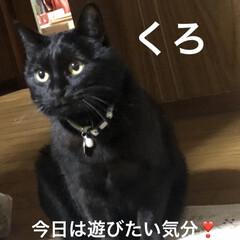 年越し蕎麦/黒猫/くろ/にこ/めん/猫/... 今日も一日お疲れ様です。今年も残り明日で…(3枚目)