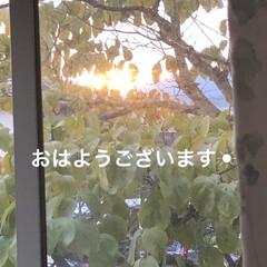 モーニングセット/めん/猫飼いのしあわせ/癒し/黒猫/にこ/... おはようございます☀朝日は見えたけどお昼…