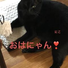 空/にこ/くろ/黒猫/めん/猫 おはようございます☀ 暑い😵掃除して洗濯…(4枚目)